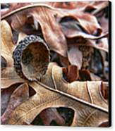 Autumn Acorn And Oak Leaves Canvas Print by Jennie Marie Schell
