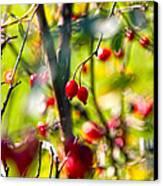Autumn Berries  Canvas Print by Stelios Kleanthous