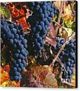 Autumn Cabernet Clusters  Canvas Print by Craig Lovell