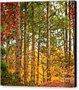 Autumn Canvas Canvas Print by Carol Groenen