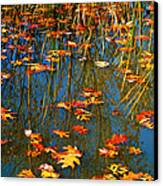 Autumn  Floating Canvas Print by Peggy  Franz