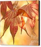 Autumn Glow Canvas Print by Anne Gilbert