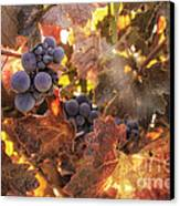 Autumn In The Vineyard Canvas Print by Michele Steffey