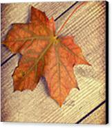 Autumn Leaf Canvas Print by Amanda And Christopher Elwell