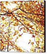 Autumn Leaves Canvas Print by Blink Images