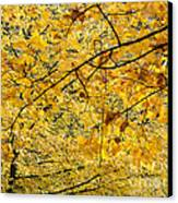 Autumn Leaves Canvas Print by Michal Boubin