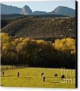 Autumn Pastures Along The Virgin River Rockville Utah Canvas Print by Robert Ford