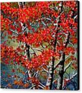 Autumn Reflections Canvas Print by Janine Riley
