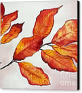 Autumn Canvas Print by Shannan Peters