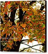 Autumn Smile Canvas Print by Jaime Lind