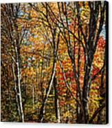 Autumn Trees Canvas Print by Elena Elisseeva