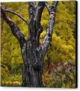 Autumn Trees3 Canvas Print by Vladimir Kholostykh