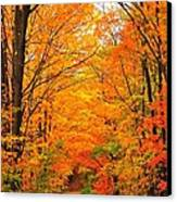 Autumn Tunnel Of Trees Canvas Print by Terri Gostola
