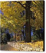 Autumn Wall - Fm000082 Canvas Print by Daniel Dempster