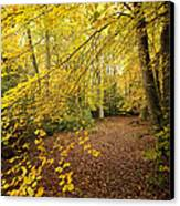 Autumnal Woodland II Canvas Print by Natalie Kinnear