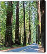 Avenue Of The Giants Canvas Print by Heidi Smith