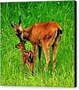 Aww Mom Canvas Print by Benjamin Yeager