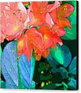 Azealia Canvas Print by Laura Sapko