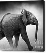 Baby Elephant Running Canvas Print by Johan Swanepoel