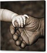 Babys Hand Holding On To Adult Hand Canvas Print by Corey Hochachka