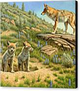 Babysitter  -  Coyotes Canvas Print by Paul Krapf