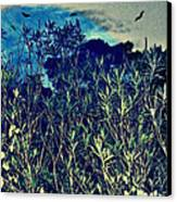 Back Yard Sky Canvas Print by YoMamaBird Rhonda