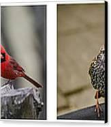 Backyard Bird Series Canvas Print by Heather Applegate
