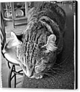 Bad Cat Canvas Print by Susan Leggett