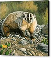 Badger   Canvas Print by Paul Krapf
