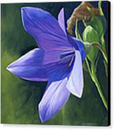 Balloon Flower Canvas Print by Alecia Underhill