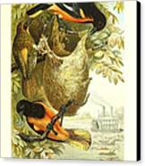 Baltimore Orioles Canvas Print by Philip Ralley
