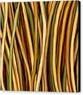 Bamboo Canes Canvas Print by Brenda Bryant