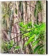 Bamboo Forest At Lamma Island Hong Kong Canvas Print by Yury Malkov