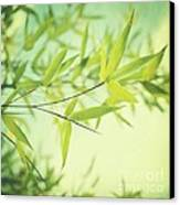 Bamboo In The Sun Canvas Print by Priska Wettstein