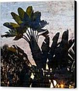 Banana Palms Canvas Print by Gilbert Artiaga