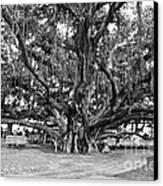 Banyan Tree Canvas Print by Scott Pellegrin