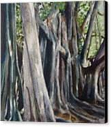 Banyan Trees Canvas Print by Karol Wyckoff