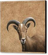 Barbary Ram Canvas Print by James W Johnson