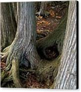 Barky Barky Trees Canvas Print by Michelle Calkins