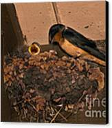 Barn Swallow Canvas Print by Ron Sanford
