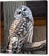 Barred Owl 264 Canvas Print by Joyce StJames