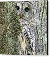 Barred Owl Peek A Boo Canvas Print by Jennie Marie Schell