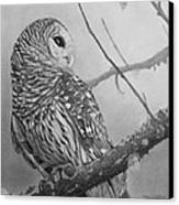 Barred Owl Canvas Print by Tim Dangaran