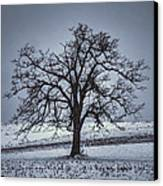 Barren Winter Scene With Tree Canvas Print by Dan Friend