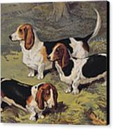 Basset Hounds Canvas Print by English School