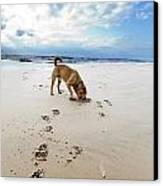 Beach Dog Canvas Print by Eldad Carin