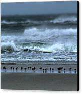 Beach Feast - Outer Banks Ocracoke Canvas Print by Dan Carmichael