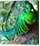 Beautiful Quetzal 4 Canvas Print by Heiko Koehrer-Wagner