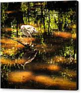 Beauty Of The Bog Canvas Print by Karen Wiles