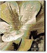 Beauty Vii Canvas Print by Yanni Theodorou